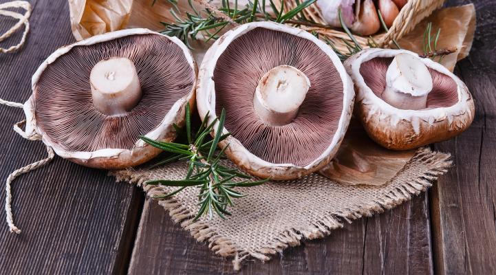Drying Wild Mushrooms