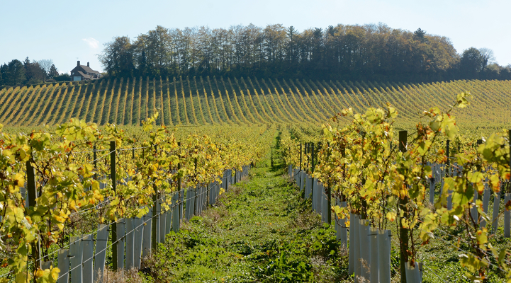 British Wine Industry Success
