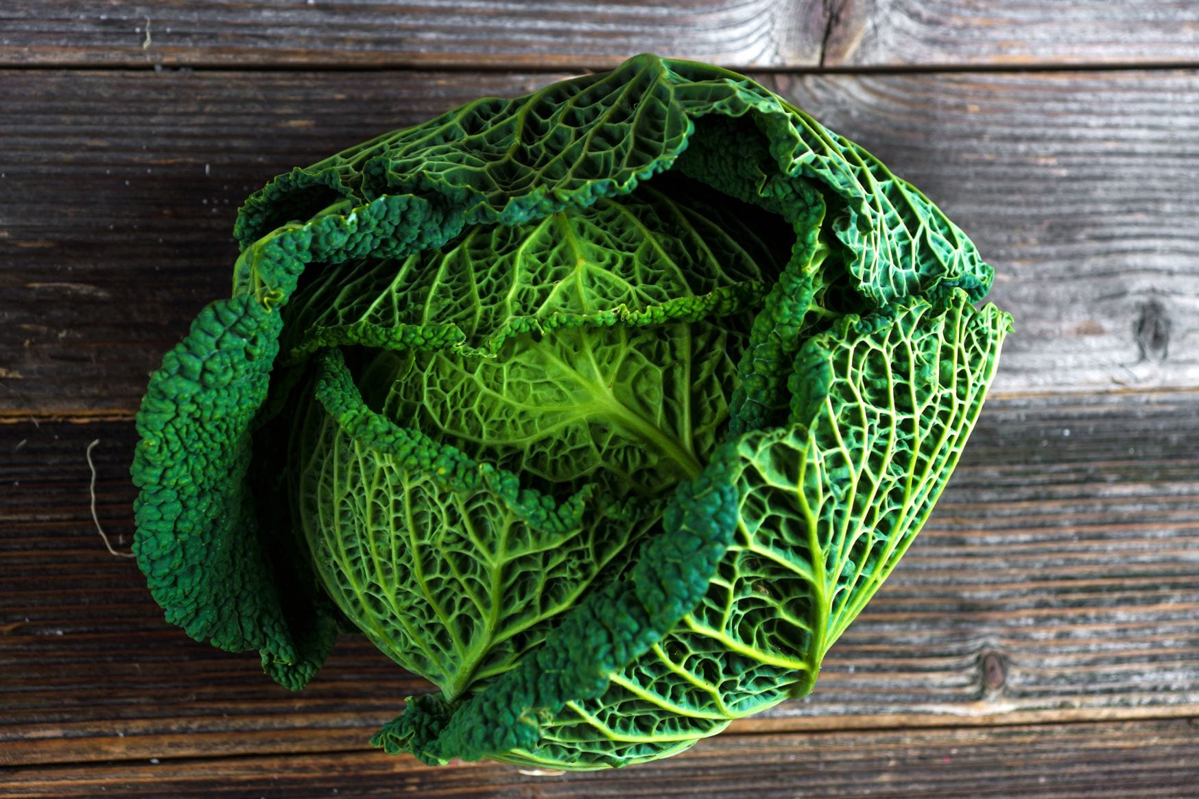 Savoy Cabbage A Tasty Delight Both Cooked And Raw Freshmagazine