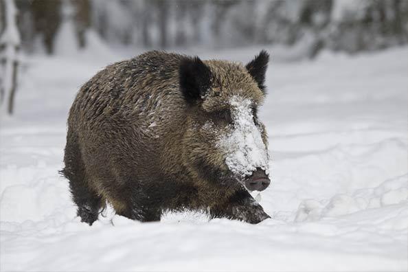 Как се съхранява дивечово месо - от полето, през хладилника, до масата