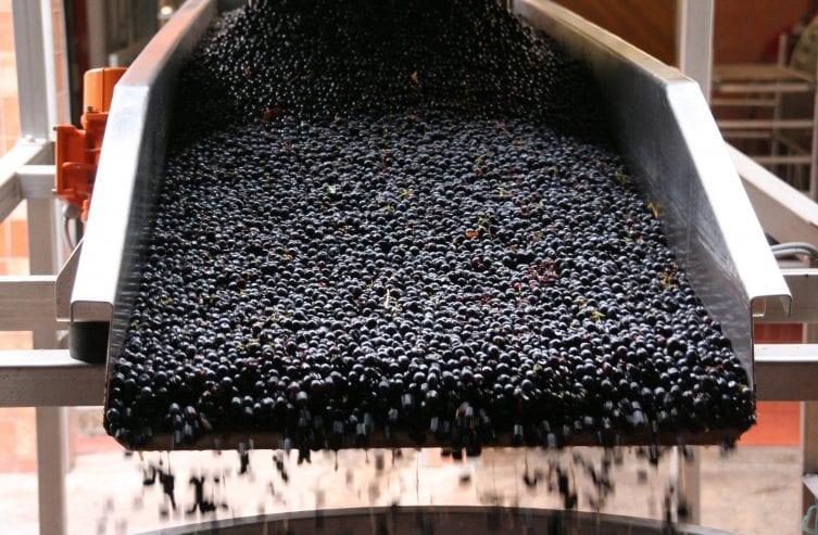 etape-de-productie-ale-vinului-5