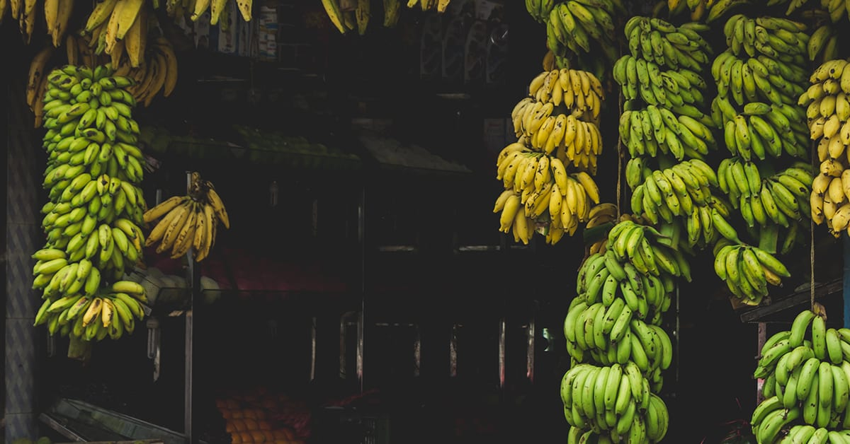 cateva-curiozitati-despre-banane-1