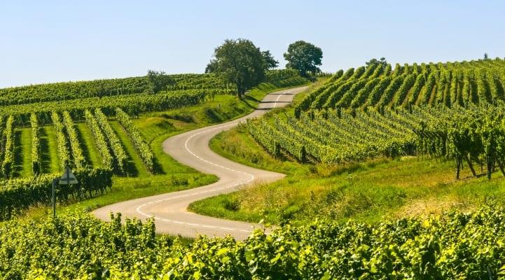 Kurvenreiche Straße in den Weinbergen des Elsass