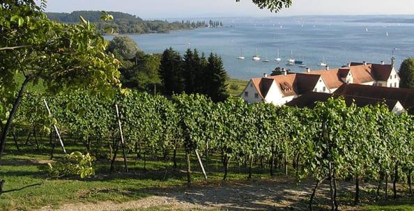 Wein, Essen, Genuss, Liebherr, Sommelier, Blog, Weinregion Bodensee