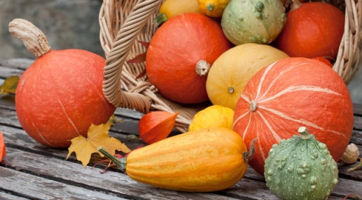 halloween, pumpkin, harvest festival, zierkuerbis, zierkuerbisse