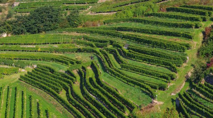 Wein, Essen, Genuss, Liebherr, Sommelier, Blog, Wachau, Steinfeder, Marillenblüte