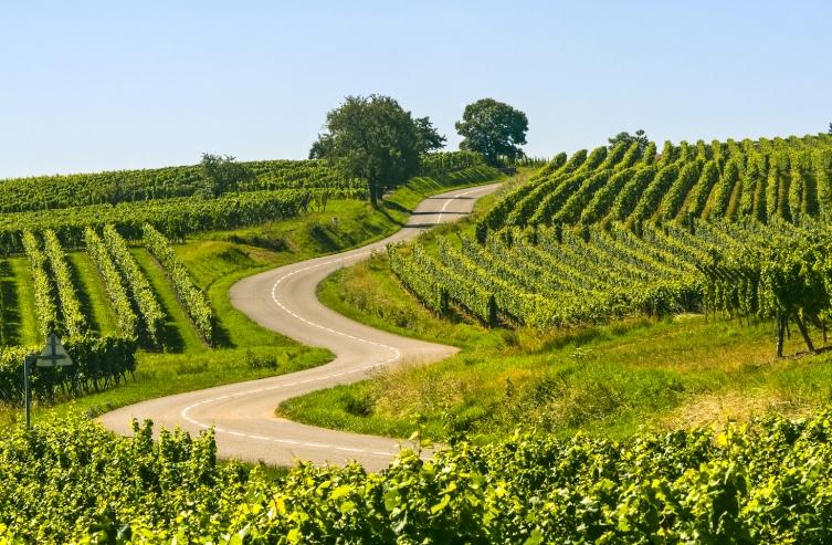 Elsass, Wein, Anbaugebiet