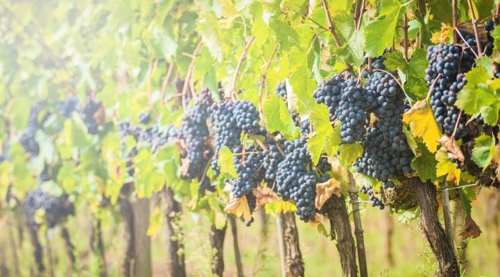 Wein, Essen, Genuss, Liebherr, Sommelier, Blog, Wein, Kultweine, Kultweinwinzer, Winzer
