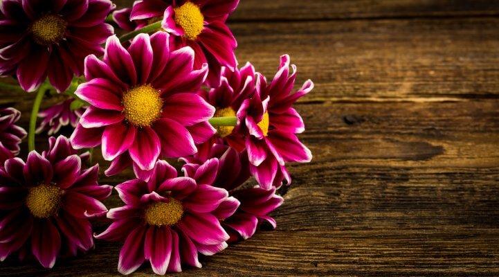 Blumen im Kühlschrank erfrischen