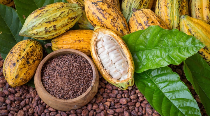 cacao vrucht