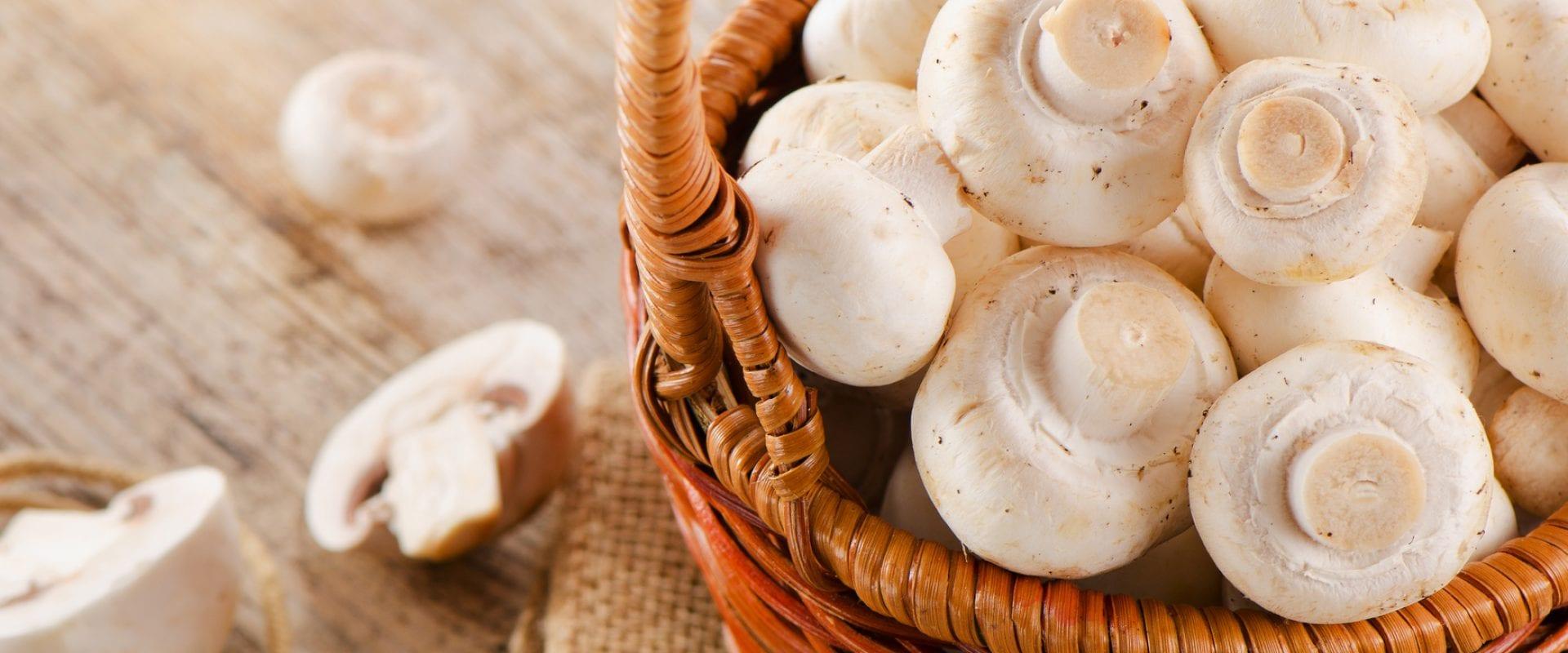 5 gode råd omkring svampe